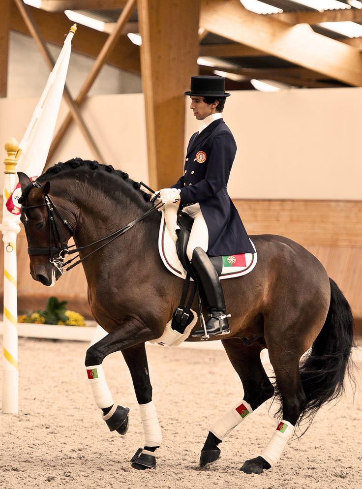 Associação Portuguesa do Cavalo Puro Sangue Lusitano
