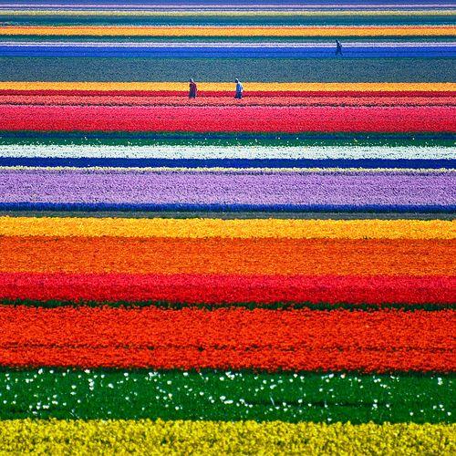 Flower fields...