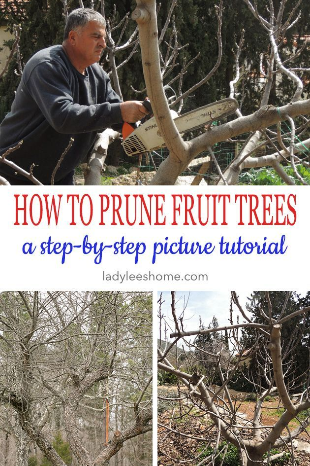 How To Prune Fruit Trees To Keep Them Small Pruning Fruit Trees Prune Fruit Fruit Trees