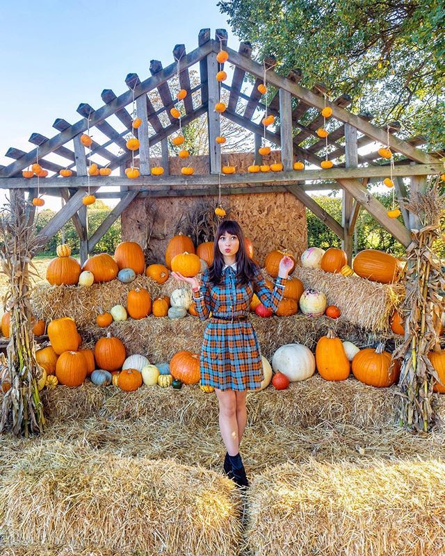 Oh My Gourd Someone Grab Me A Pumpkin Pie Stat Yes I Know Its