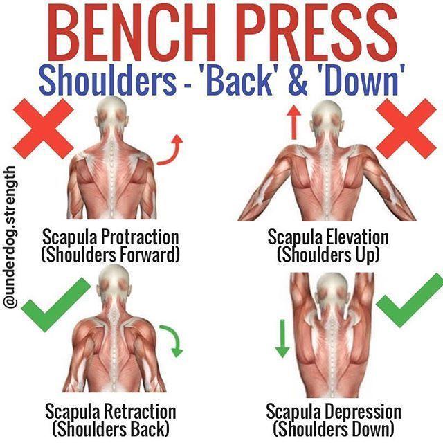Bench Press Shoulders Back And Down En 2020 Ejercicios De Entrenamiento Entrenamiento Ejercicios