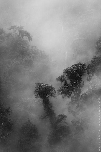 Bosque nublado en Tandayapa (Quito, Pichincha, Ecuador). Cloud forest in Tandayapa (Quito, Pichincha, Ecuador)