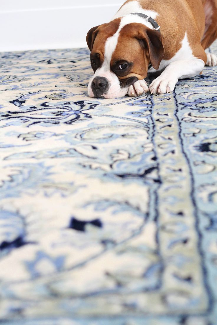 How To Clean Food & Pet Stains From A Wool Rug — Apartment Therapy Tutorials
