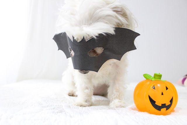 Con Perros y a lo loco | Vida perruna | Dogs & Lifestyle: Halloween: disfraz para perros
