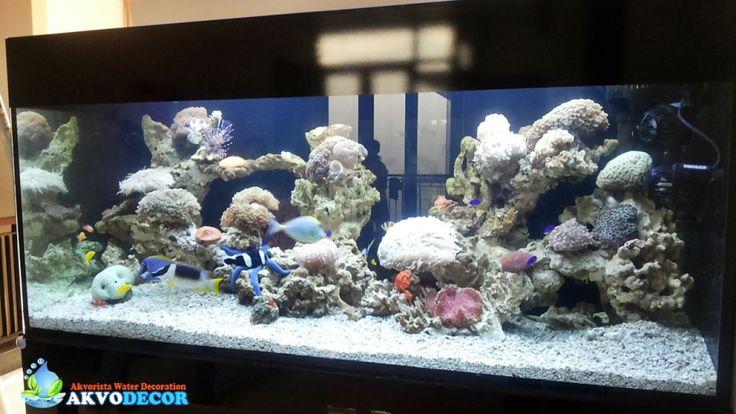 Akvodecor | Aquarium Laut | Aquarium Tawar | Dekorasi Aquarium | Pembuatan Kolam Koi - Aquarium Air Laut | Aquarium Air Tawar | Dekorasi Aquascape | Dekorasi Aquarium | Jasa Pembuatan Kolam Koi