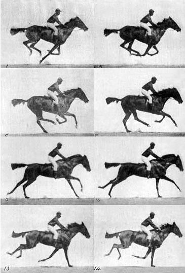 (Eadward Mybrige)The main question behind this photo was, whether all four feet of a horse were off the ground at the same time while trotting. The human eye could not break down the action at the quick gaits of the trot and gallop. So he set up a series of cameras controlled by a single wire and as the horse set off, so did he by pulling the wire thus the flash captured every glop the horse did and proved that the horse doesn't fly off the track.