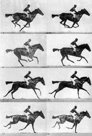 Horse in Motion, Eadweard Muybridge, ca. 1886, via Harry Ransom Center