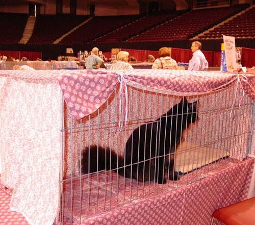 Vorhänge Bilder Making Cat Show Cage Curtains - Showcatsonline.com: The Online