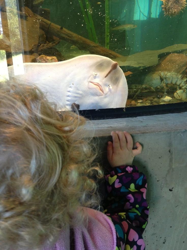 Fundy Discovery Aquarium, Saint Andrews NB