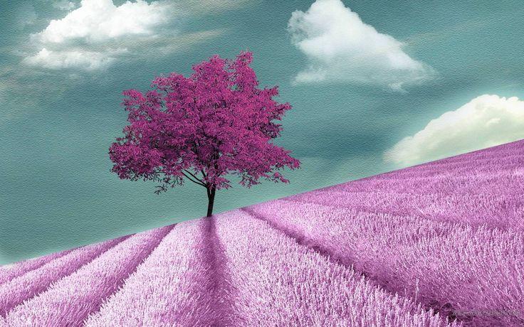Kuvahaun tulos haulle purple tree