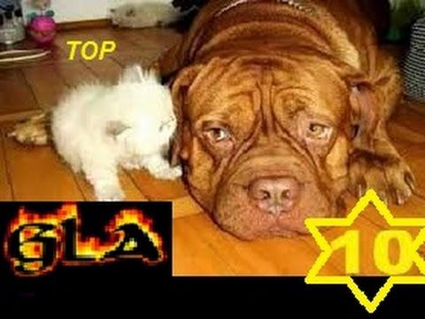 Top 10 Biggest Dog & Cats in the World New 2017   Biggest ...