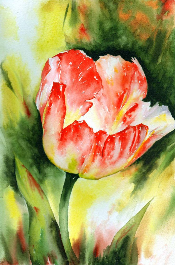 Art farm animal watercolor painting on canvas art 8x10 artsyhome - Red Tulip By Andrew Swift