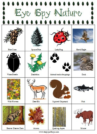 Get outdoors with the kids with this easy Eye Spy Nature Hunt game and Printable!