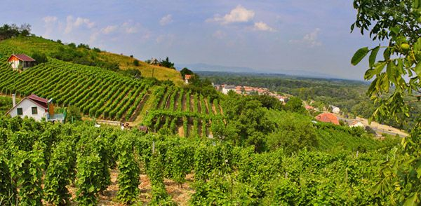 Fertő és Tokaj hegyalja - Világörökség Magyarországon