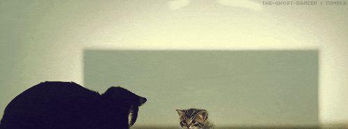 David Tennant <3 and cats :)