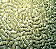 El segundo cerebro, sistema nervioso entérico, también condiciona nuestra salud.