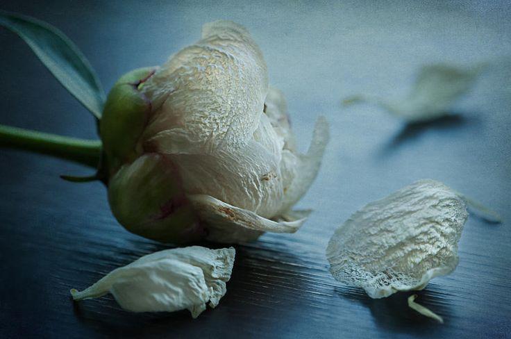Still Photograph - Slipped Away by Maggie Terlecki