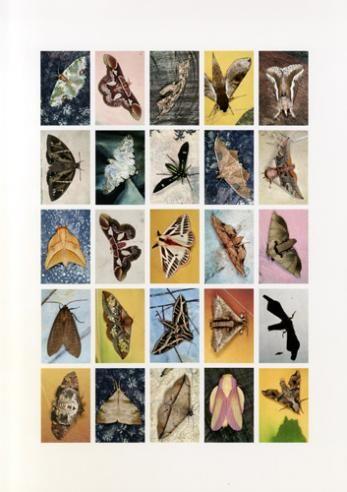 EMMET GOWIN Mariposas Nocturnas, Index No. 35, Potrerillos del Guenda, Santa Cruz, Bolivia, October 2010