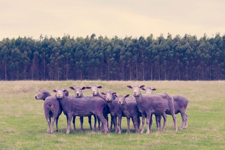 The Best Spring Prints On Sale Right Now | Purple Sheep by Gray Malin