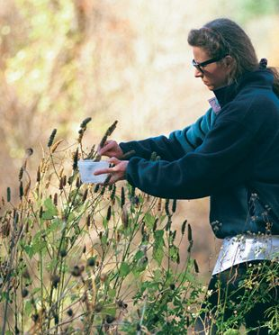 """Quote: """"This lady really knows her seeds.  She explains in great detail how to pick seeds and how to store them."""""""