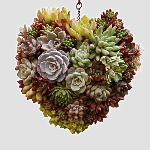 Iron Hanging Wreath Cacti Succulent Herb Flower Planter | Home & Garden, Yard, Garden & Outdoor Living, Gardening Supplies | eBay!