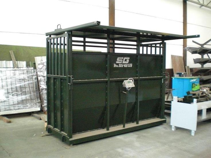Todo el ganado debidamente pesado.   Báscula para el ganado vacuno con visor en acero inoxidable y batería. http://www.sanchezgalan.es/instalaciones-ganaderas/List/show/263