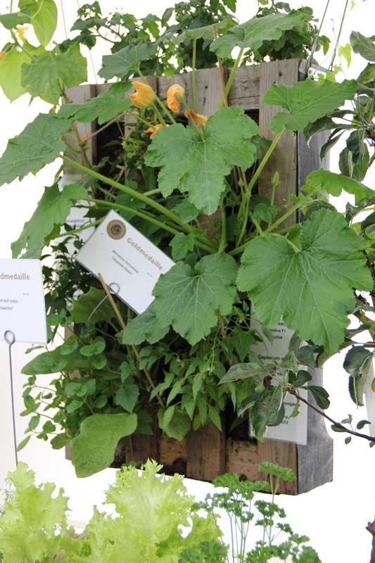 ungewöhnliche gärten | Mein Balkon: Ungewöhnliche Pflanzgefäße - Vertikale Gärten