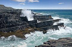 Coastline at Mistaken Point Ecological Reserve