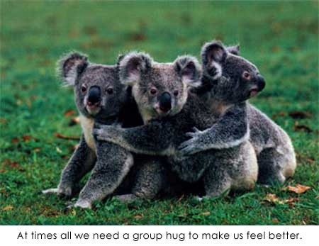 Cute And Funny Baby Koala Wallpaper Group Hug Everyone Robin Cute Adorable Animals