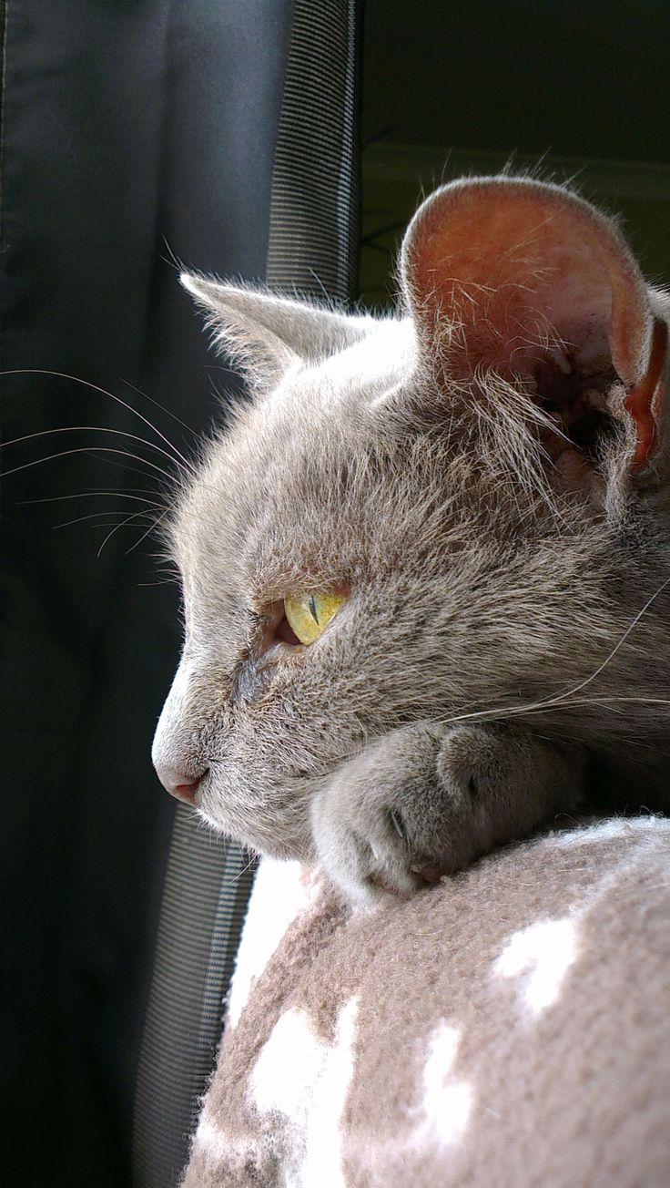 My gorgeous boy Saxon