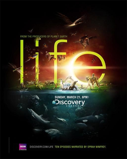 interest in watching discovery channel Fetch tv today announced the addition of discovery networks' leading male and  female channels, discovery channel and tlc to the fetch channel line-up.
