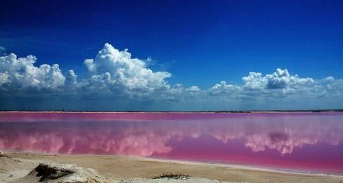 Pink Lagoon, Yucatan, rio lagartos