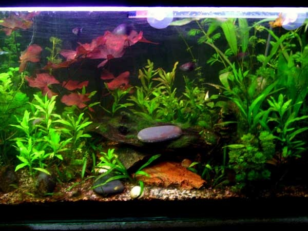 1000 images about fish freshwater and aquarium on for Well water for fish tank
