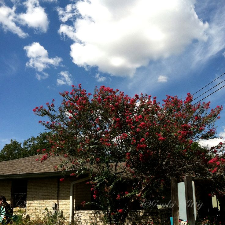 Flowering trees in Texas