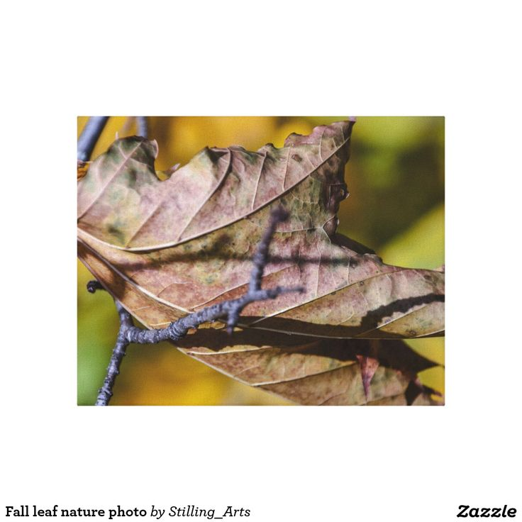 Fall leaf nature photo stretched canvas print