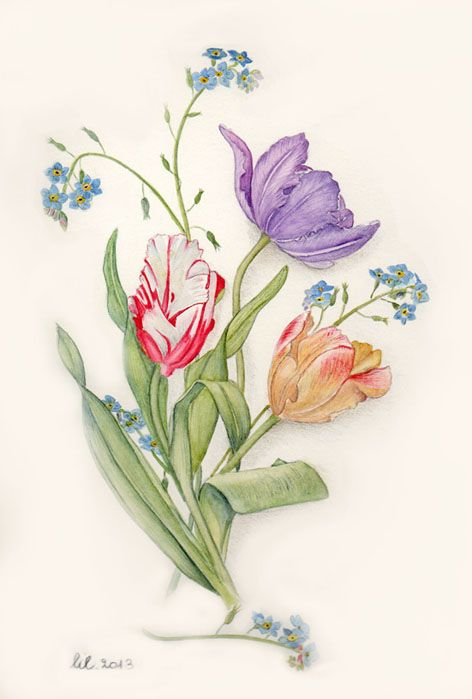 tulipani e myosotis