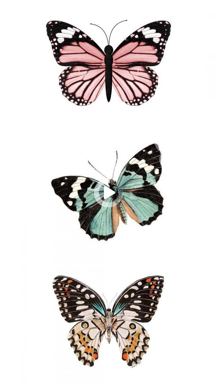 52 In 2021 Butterfly Art Butterfly Wallpaper Iphone Wallpaper Iphone Cute