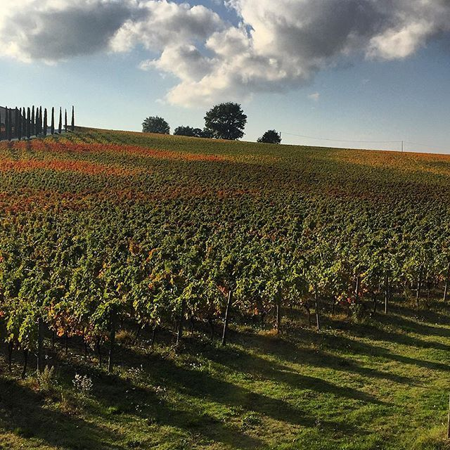 Colori autunnali  #nature #vineyard #clouds #colorful #italy #autumn