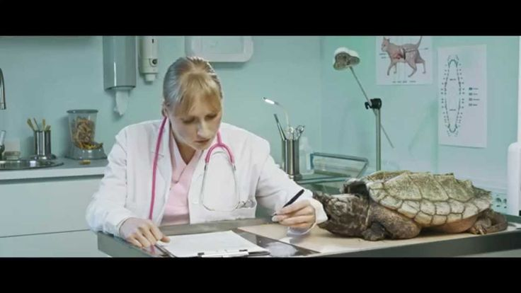 """Pensionsmyndighetens reklamkampanj 2015.  """"Det är enklare än du tror att ta hand om pensionen Jobba, betala skatt och se till att du har tjänstepension från din arbetsgivare.  Svårare än så är det oftast inte. Gör en prognos för hela din pension på http://www.pensionsmyndigheten.se/prognos""""  #Pensionsmyndigheten #prognos #orangekuvert #pension  #reklam #veterinärer #mops #sköldpadda #allmänpension #inkomstpension #premiepension #tjänstepension"""