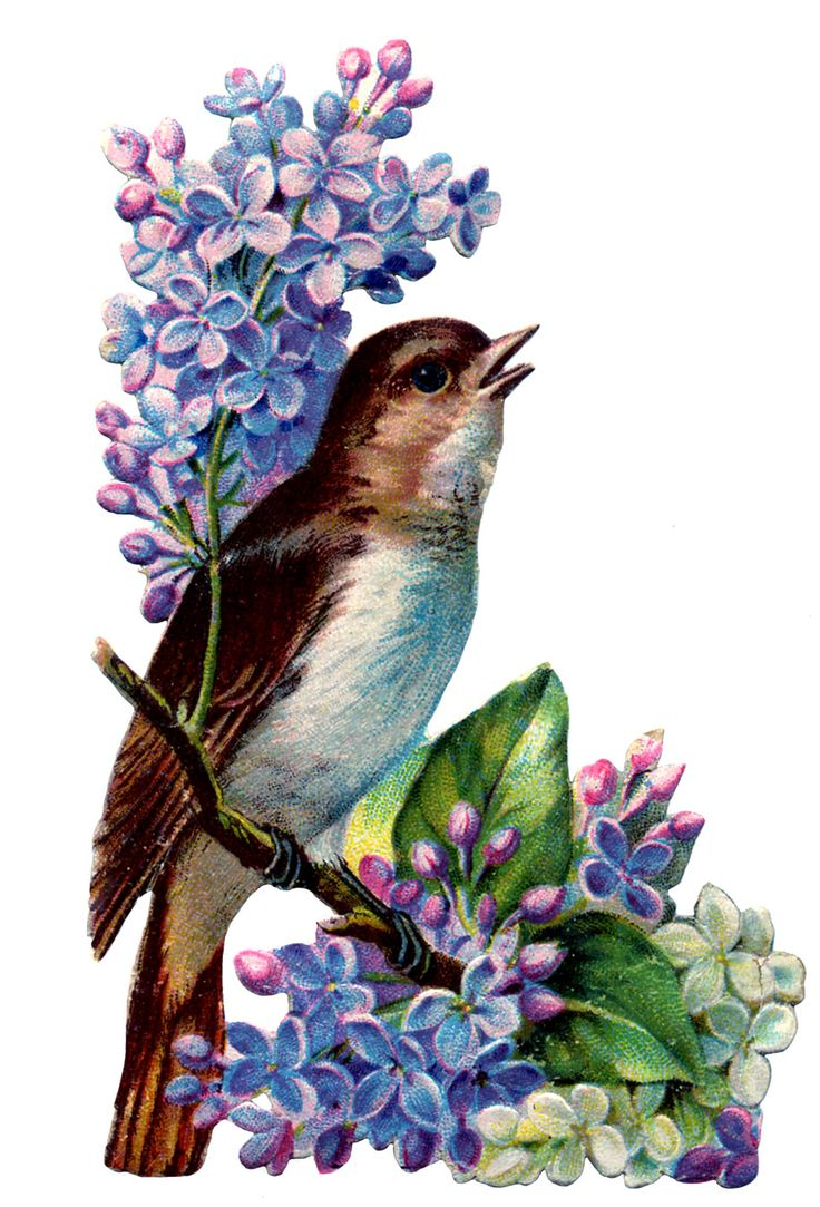 *The Graphics Fairy LLC*: Vintage Image - Bird with Lilacs