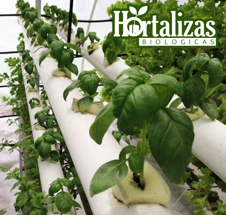 cultivos hidropnicos bogot