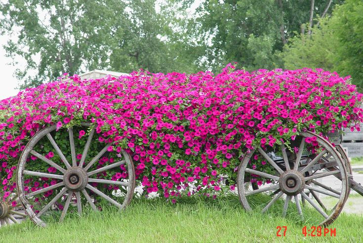 pink flowers in a wagon | by micheleart