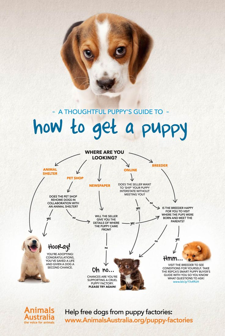 Buying a puppy infographic. ethical animal