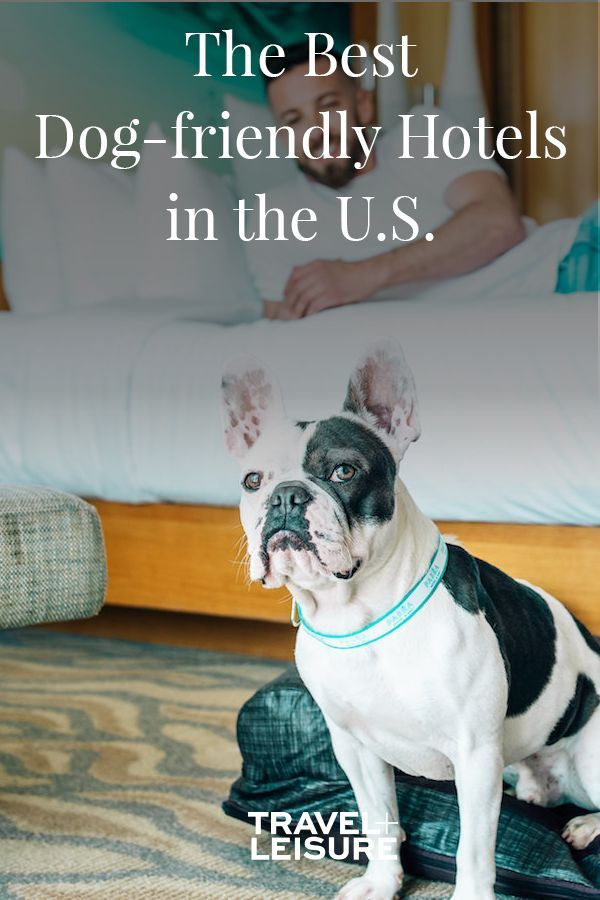 The Best Dog Friendly Hotels In The U S Dog Friendly Hotels Dog Friends Dog Hotel