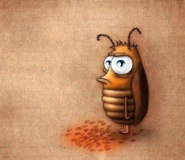 юмор картинки про тараканов хорошо