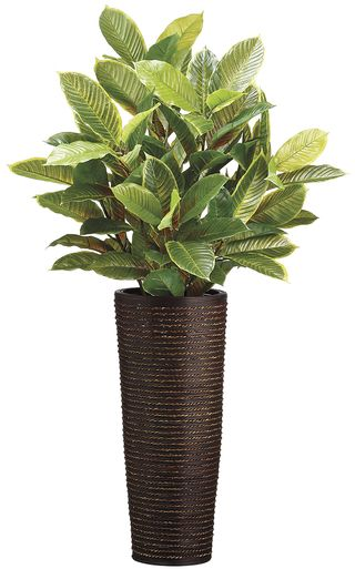 50 Inch Tall Lagerstroemia Plant inBamboo Container