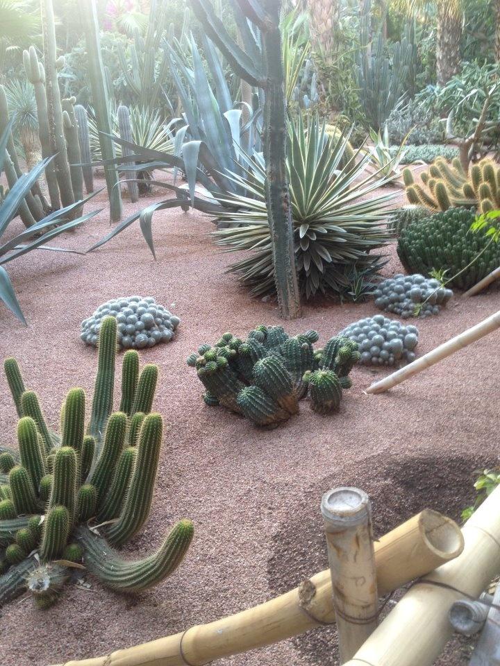 Backyard Cactus Garden cactus garden | inspirations from marrakech | pinterest | cactus