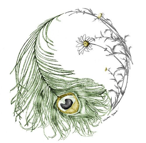 Beautiful feather/daisy yin yang- may be the official winner of the peacock tattoo *this is interesting