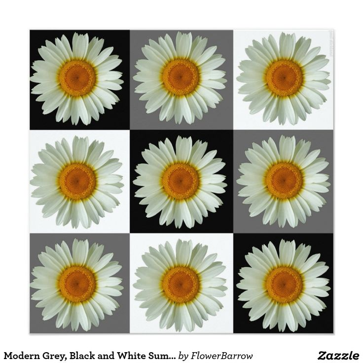 Modern Grey, Black and White Summer Daisy Pattern 5.25x5.25 Square Paper Invitation Card