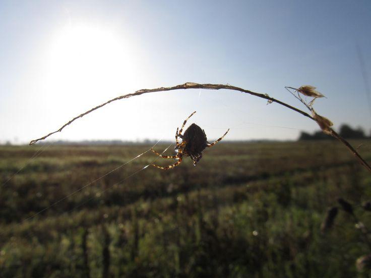 Spider by Tomáš Junga on 500px